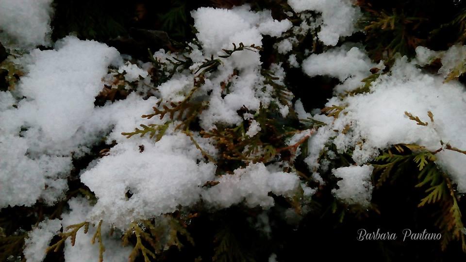 Nozze D'inverno