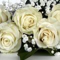 Sposa timida e riservata